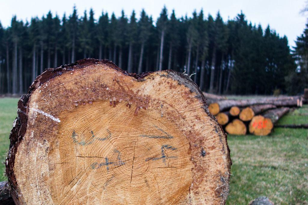 Berühmt Oberndorf a. N.: Borkenkäfer: befallene Bäume besser erkennen &VP_26
