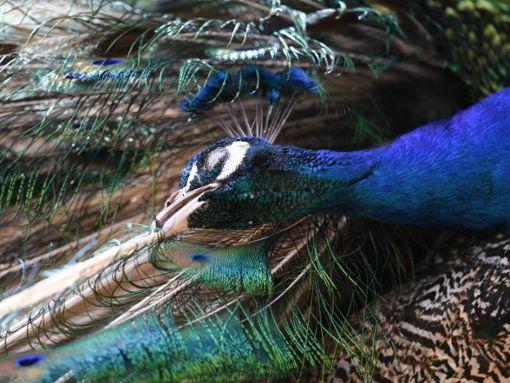 Ein Vogelpaar flüchtet vor den Beamten in Uniform. (Symbolfoto) Foto: dpa