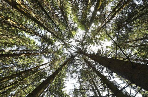 Der Wald leidet unter der langanhaltenden Trockenheit. (Symbolbild) Foto: dpa