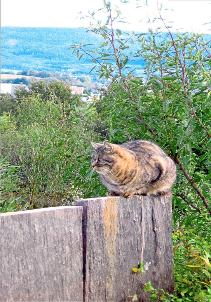 seit zehn tagen ist kater max aus bechtoldsweiler verschwunden er ist nur eine von sechs katzen. Black Bedroom Furniture Sets. Home Design Ideas
