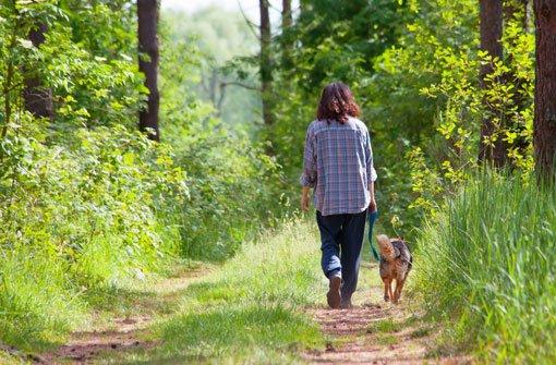 Eine Frau ist bei einem Spaziergang von drei Hunden angegriffen worden. (Symbolfoto) Foto: Shutterstock/vvvita