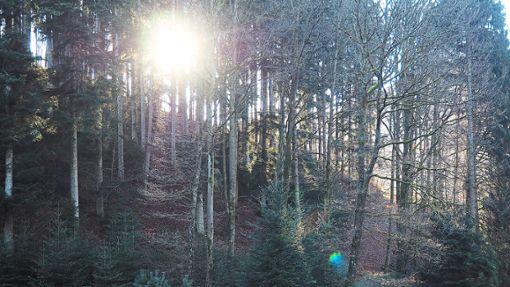 Das Rockenjhr 2018 macht den Wäldern zu schaffen – auch dem Hausacher Stadtwald. Foto: Reinhard