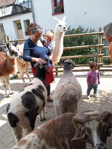 Die Tiere sind dankbar für Streicheleinheiten.   Foto: Münchau Foto: Schwarzwälder Bote