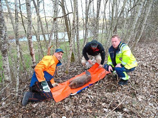 Andreas Schreiber, Tierarzt Peter George und Tierretter Dirk Hildebrand (von links) kümmern sich um das Tier.   Foto: Schreiber