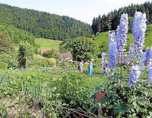 Besuchserlebnis am Freitag: der Bauerngarten des Bühlhofes in Oberwolfach. Foto: Haas