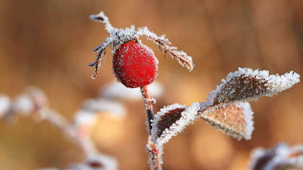 Furtwangen: 18 Frosttage im Schnitt zu erwarten - Schwarzwälder Bote - Schwarzwälder Bote