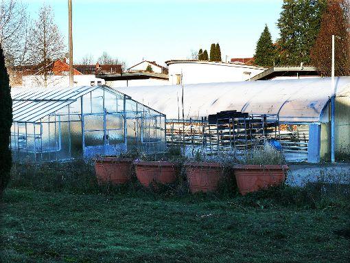 Blumenkübel und Gewächshäuser der ehemaligen Stadtgärtnerei müssen einem Neubau weichen.   Foto: Hauser Foto: Schwarzwälder-Bote