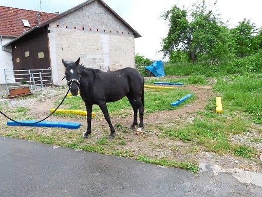 Den Platz in der Winkelstraße in Wiesenstetten nutzt Denise Kessler nur, um ihren Pferden Bewegung zu gönnen. Foto: Begemann