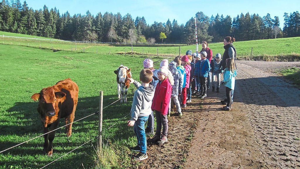 Vöhrenbach: Ganz nah dran an den Bauernhof-Tieren - Vöhrenbach - Schwarzwälder Bote