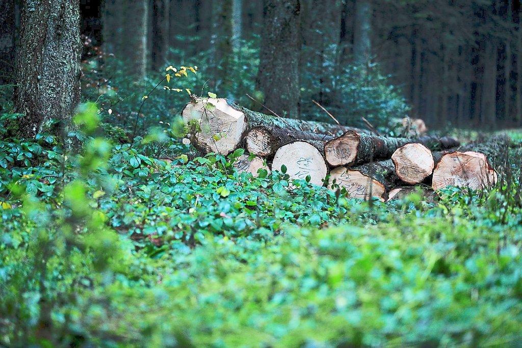 Schwarzwald Baar Kreis Holzverkauf Soll Untersagt Werden