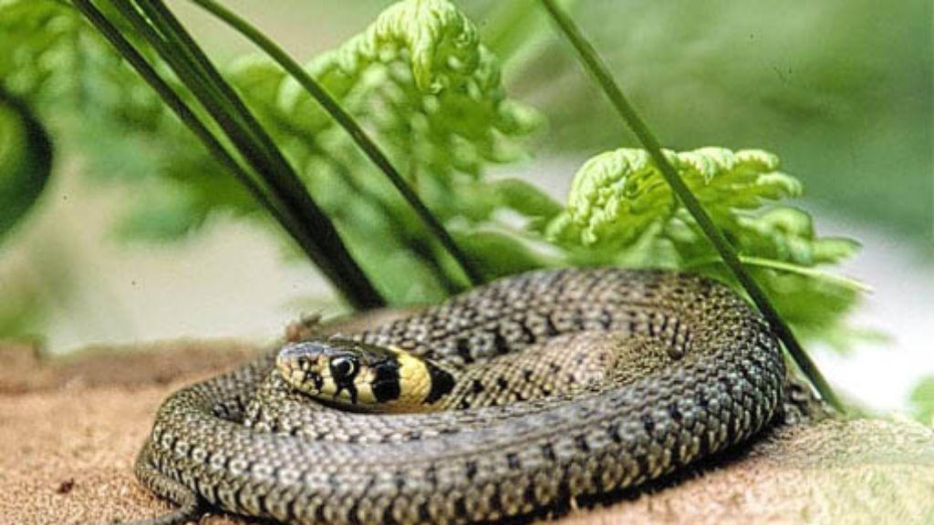 Reptilien-Dating-Website