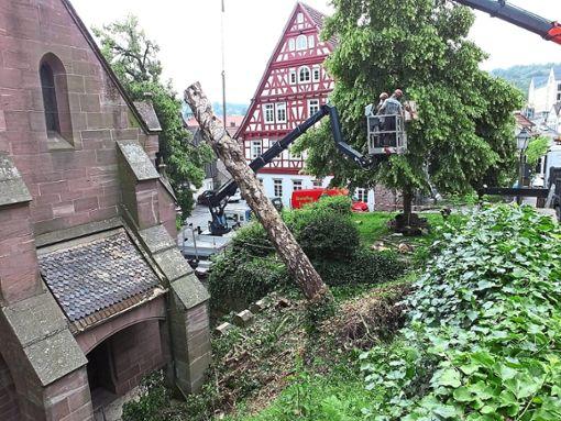 Der umgestürzte Baum wurde scheibenweise vom Dach abgetragen.   Foto: Stocker