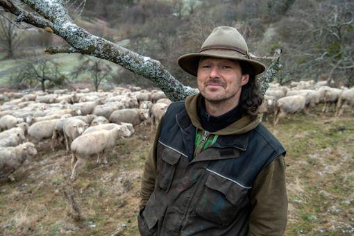 Der Schäfer Thilo Studer bei seiner Schafherde. Studers Herde besteht aus tund 400 Muttertieren. Foto: dpa