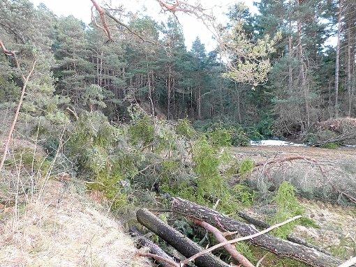 Hat das sein müssen? Über die frisch gefällten Bäume auf dem Neufraer Kapf ärgern sich Naturliebhaber. Foto: Kammerer