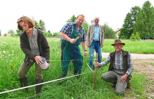 Gundula und Helmut Link (rechts) verlegen mit Heiko Duss Elektrozäune. Neu-Gemeinderat Klaus Hoffmann informiert sich über die große Zahl der Wildschweinschäden auf den Weideflächen des Landwirts. Foto: Zoller
