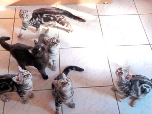 Derzeit zu vermitteln: Zwölf kleine und drei große Katzen. Foto: Danner