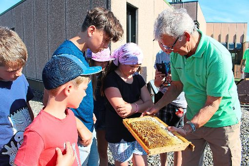 Respektvollen Abstand halten die Kinder von den Bienen, die auf den Waben sitzen.   Foto: Privat Foto: Schwarzwälder-Bote
