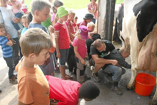 Mit großem Interesse verfolgten die Kinder das Melken. Ganz Mutige versuchten es auch selbst einmal am Euter.   Foto: Hübner Foto: Schwarzwälder-Bote