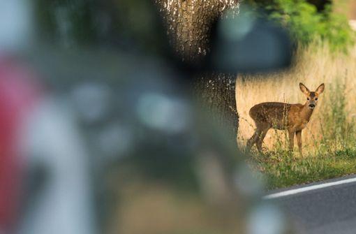 Für Autofahrer gilt: Augen auf! Im Herbst steigt die Gefahr von Wildunfällen wieder. (Symbolbild) Foto: dpa-Zentralbild