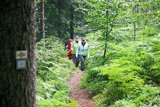 Das hat eingeschlagen: Neue Freizeitangebote wie  der Wanderhimmel Baiersbronn und  Mountainbike-Kurse  kommen bei den Touristen gut an.  Foto: Baiersbronn Touristik