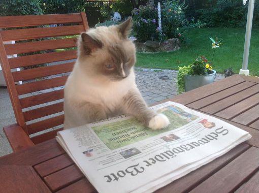 Merlin liest auch gerne den Schwabo. Foto: Claudia Kopf