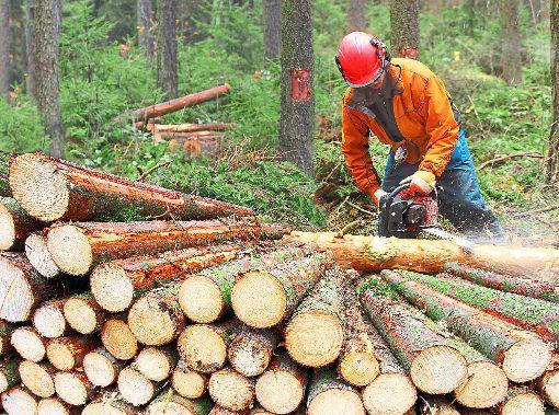 Die Zahlen für das Forstwirtschaftsjahr 2017 fielen in Schömberg positiv aus.   Foto: © Kletr – stock.adobe.com Foto: Schwarzwälder-Bote
