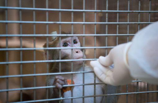 Keine Tierversuche mehr an Affen. Foto: dpa
