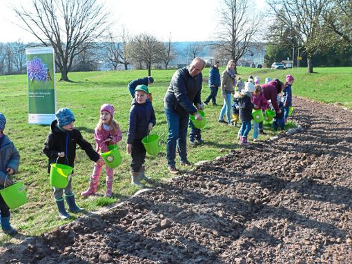 Den Kindern machte das Säen viel Spaß. Auch Schömbergs Bürgermeister Matthias Leyn nahm einen Eimer mit Saatgut in die Hand.  Foto: Krokauer Foto: Schwarzwälder Bote