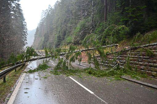 Sturmtief Burglind ist am Mittwoch auch über den Schwarzwald gezogen.  Foto: Dold