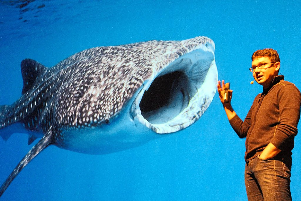 Größter Fisch Der Erde