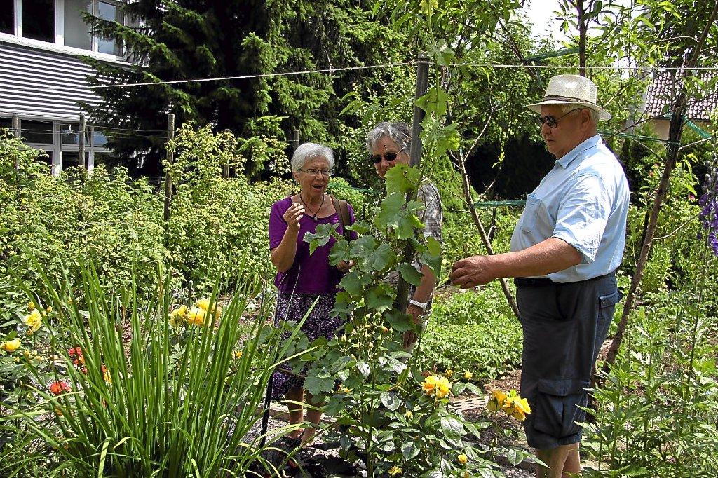 Gisela blum hadert in ihrem garten etwas mit dem langen winter und dem schlechten fr hjahr weil - Pfirsichbaum im garten ...