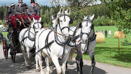 Prächtige Gespanne gingen beim Internationalen  Traditionsfahren auf die Strecke.   Foto: Waltraud Günther