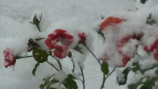 Wir zeigen die schönsten Schneebilder unserer Leser. Foto: Regina Schwenk