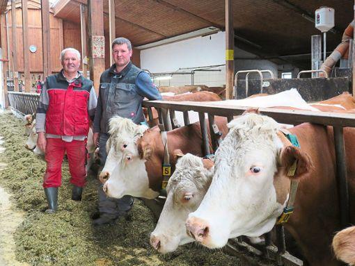 Reinhold Moßbrugger und Sohn Markus haben seit 22 Jahren einen Laufstall für ihre Milchkühe. Seither werden aus Vorsichtsmaßnahmen sowie aus Platzgründen die Hörner der Kälbchen unter Betäubung weggebrannt.  Fotos: Lendle Foto: Schwarzwälder Bote