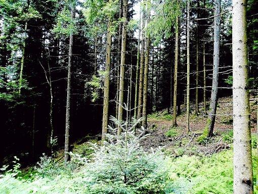 Ein Gast in Ilse-Maria Freudenreichs Frühstückspension unternahm eine Wanderung von Bad Rippoldsau-Schapbach nach Alpirsbach und verschätzte sich mit der Zeit. Bei der nächtlichen Tour durch den dunklen Wald wurde ihm anschaulich bewusst, warum der Schwarzwald Schwarzwald heißt.  Foto: Freudenreich