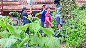 Swr Gartensendung