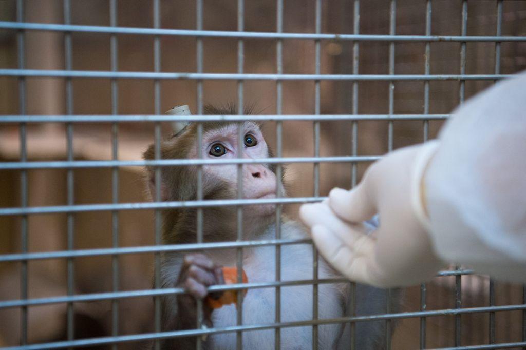 Strafbefehle wegen Misshandlung von Affen erlassen