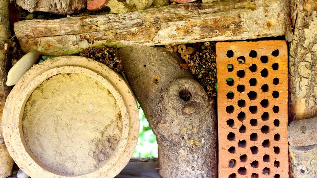 Hechingen: Nur sieben Arten machen den Honig - Hechingen - Schwarzwälder Bote
