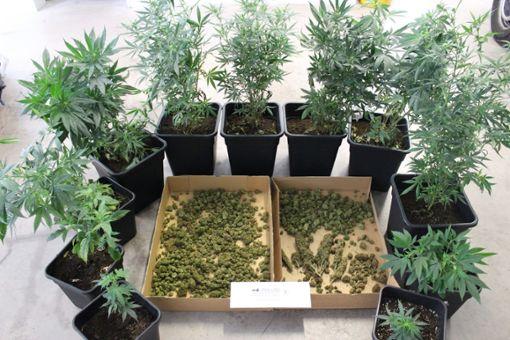 Die in Hausach konfiszierten Pflanzen.  Foto: Polizei