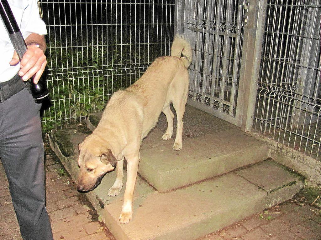 72-jährige Deutsche von Hund zu Tode gebissen