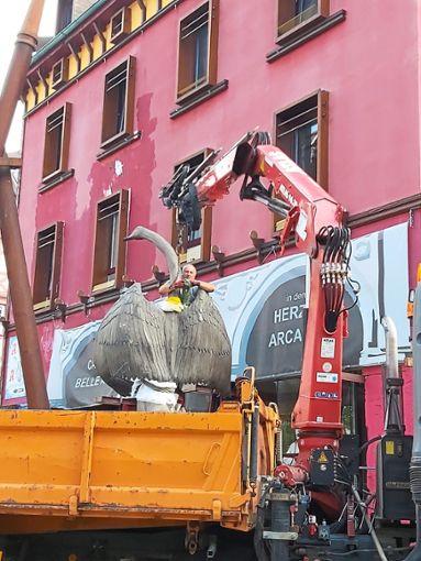 Schwan an der Schlinge: Ein Bauhof-Mitarbeiter bereitet den Kraneinsatz vor.  Foto: Ganswind
