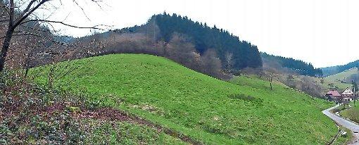 Oberwolfacher Räte lehnen Aufforsterungsantrag ab. Foto: Haas