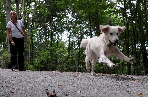 Am Donnerstagabend ist auf der L 449 bei Bitz (Zollernalbkreis) ein Hund in ein Auto gerannt. (Symbolfoto) Foto: dpa