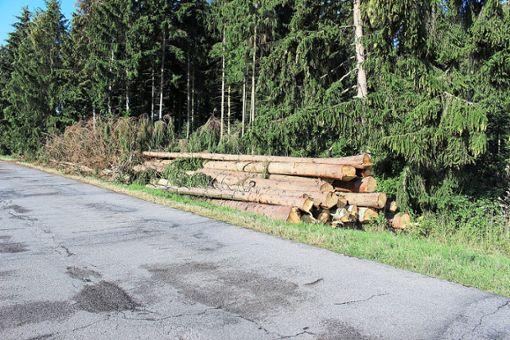 In dem Waldstück direkt bei der Realschule wurden in den vergangenen Wochen mehrere einzelne Bäume abgeholzt, sie waren massiv vom Borkenkäfer befallen. Foto: Strohmeier