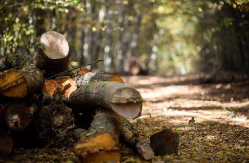 Mehr als ein Drittel der Bäume im Land seien geschädigt, bilanziert Forstminister Peter Hauk. Der Borkenkäfer und der Klimawandel setzen den Wäldern zu. Foto: dpa