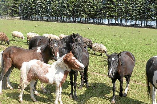 Der Ponyherde auf dem Dürrenhardter Hof geht es gut. Die Tiere können sich auf großen Koppeln austoben. Foto: Begemann
