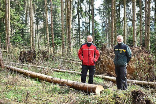 Forstamtsleiter Frank Kapahnke (rechts) und der Deißlinger Förster Thomas Zihsler erwarten in diesem Jahr einen besonders starken Schwärmflug des Borkenkäfers. Foto: Merk