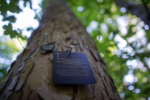 In Nagold soll nun künftig auch die letzte Ruhe unter Bäumen möglich sein.   Foto: Büttner Foto: Schwarzwälder Bote