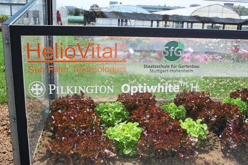 Das Empfinger Unternehmen HelioVital erforscht, wie sich Pflanzen unter einer UV-Filterfolie entwickeln.  Foto: HelioVital Foto: Schwarzwälder Bote