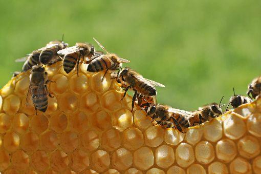 Imker in der Region müssen sich derzeit um ihrer Bienenvölker Sorgen machen. Die amerikanische Faulbrut befällt die Brut und lässt so ganze Völker aussterben.  Foto: © Bettapuggi/Fotolia.com Foto: Schwarzwälder-Bote